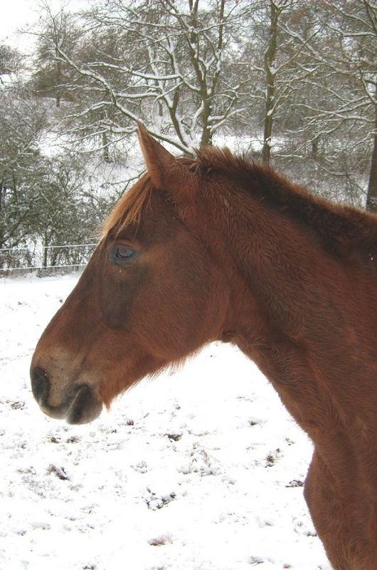 Plüschmonster im Schnee