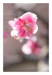 Plum Garden-12