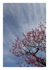 Plum Garden-3