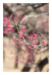 Plum Garden-5