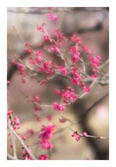 Plum Garden-6