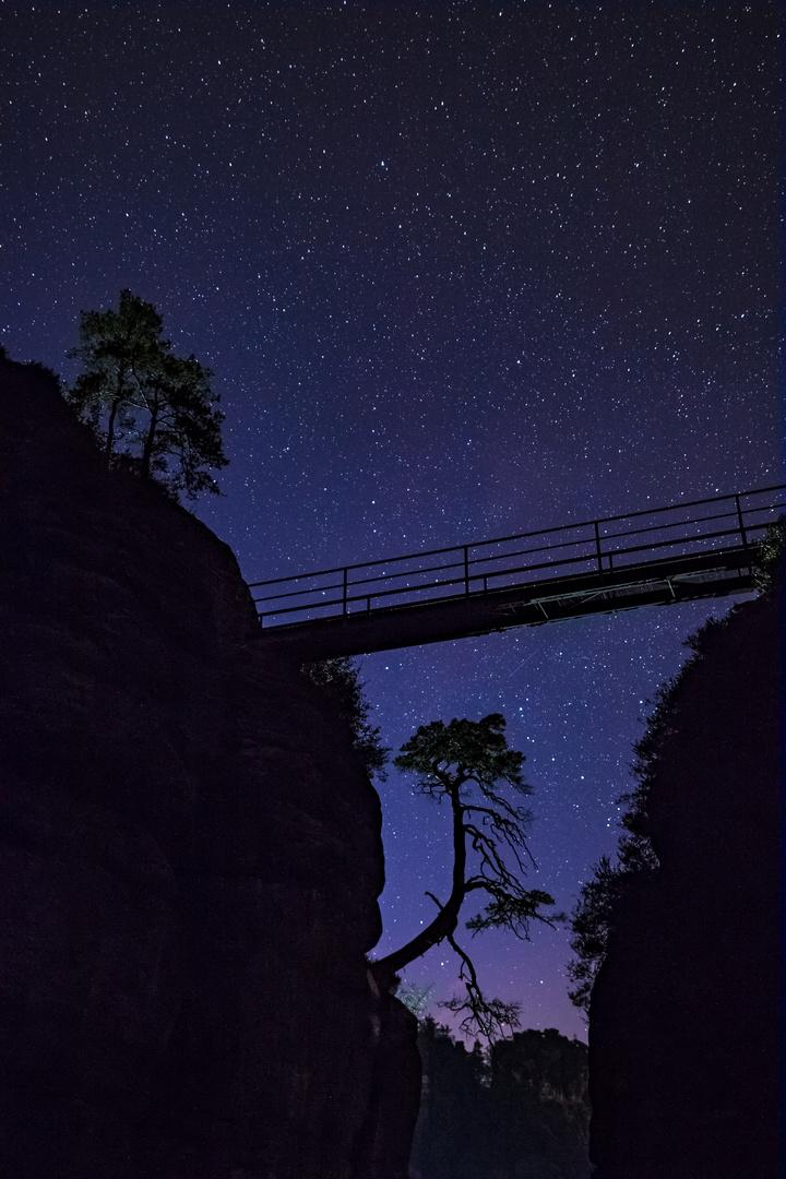 Pölkingkiefer unterm Sternenzelt