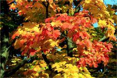 Poesie der Herbstfarben
