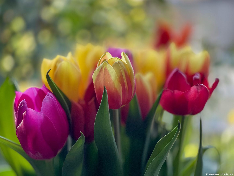 Poesie mit Licht und Farben