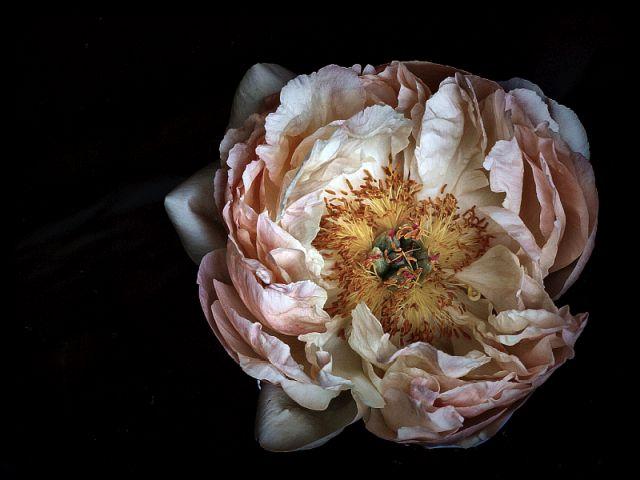 P.O.E.T.R.Y. / Mittwochsblümchen