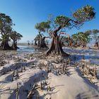 Pohon Bako