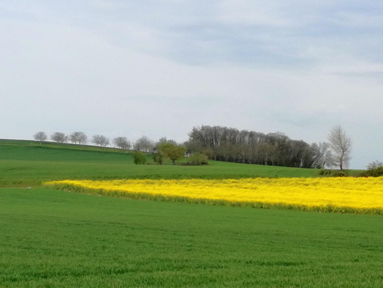 Pointe jaune !