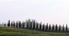pointy trees
