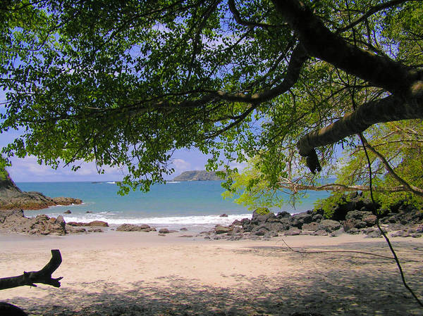 Poison Beach
