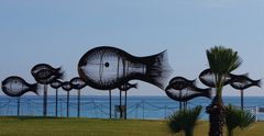 poissons volants!!!