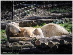 [polar bear and cub]