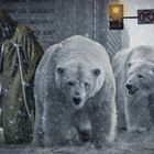 Polar bears lost in the city