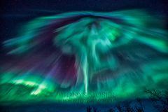 Polarlicht-Pilz