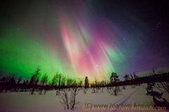 Polarlichter i Lappland