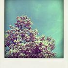 Polaroid Magnolienbaum