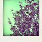 Polaroid Rosa Blüten
