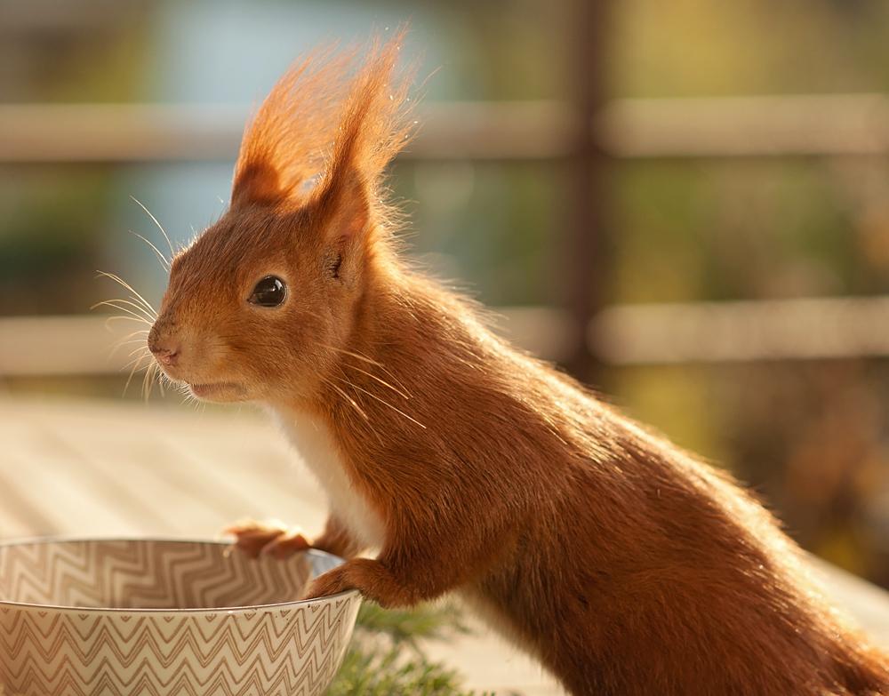 Poldi – mein Balkonhörnchen