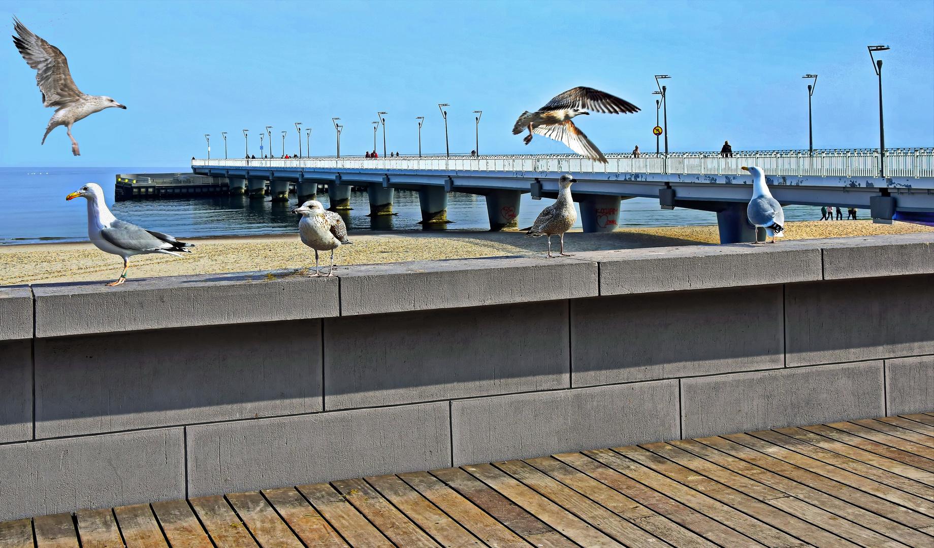 POLEN   - Strand von Grzybowo -