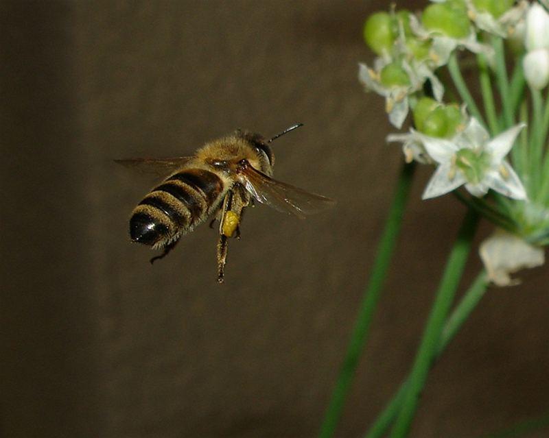 Pollen-(an)-flug