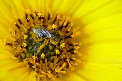 Pollen-Bad