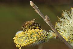 Pollen über und über