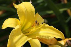 Pollenakrobatik