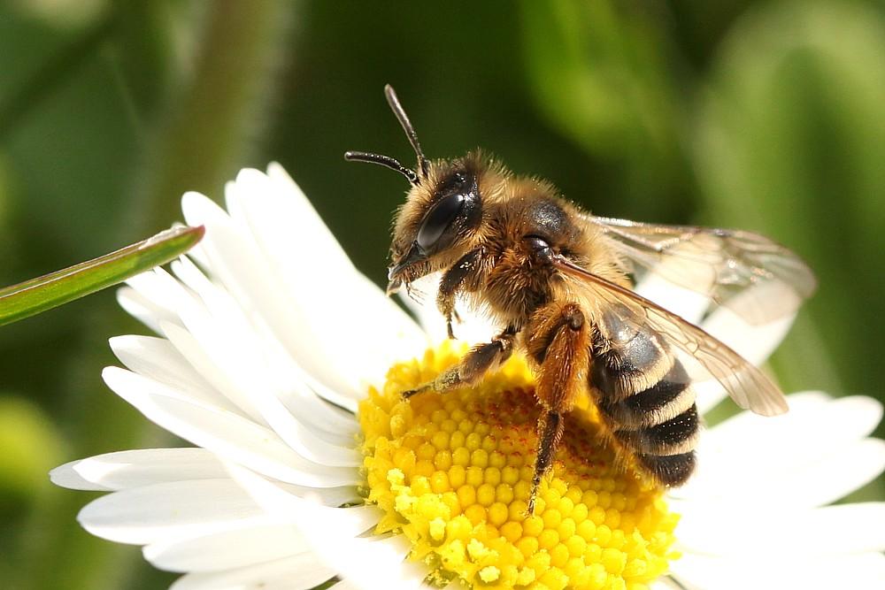 Pollenbad
