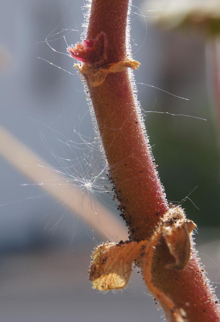 Pollenflug und Landung