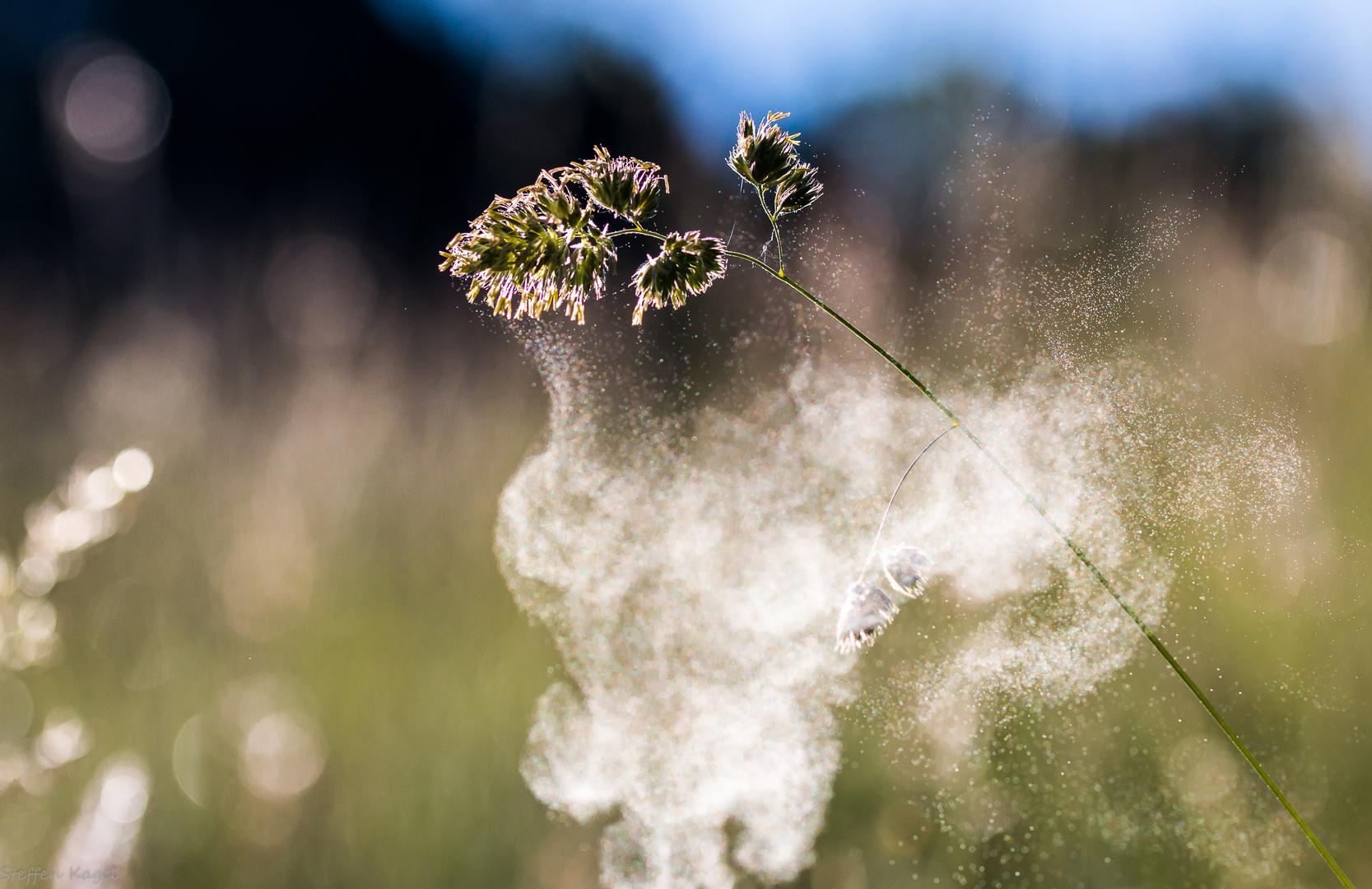 Pollenflug2
