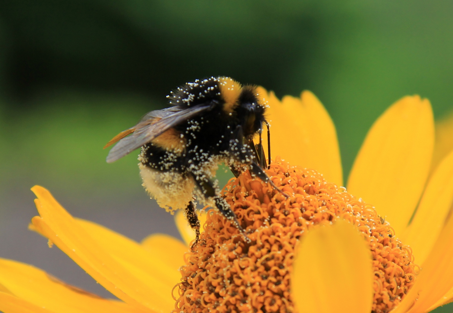 Pollenfluginformation