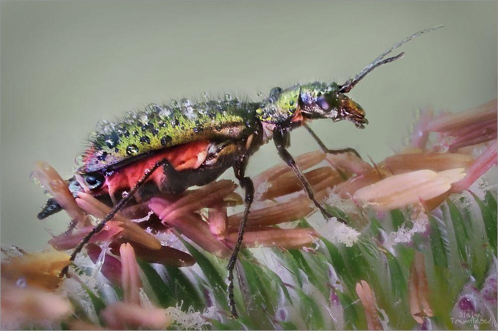 Pollenfresser