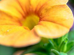 Pollenkrümel