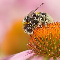 Pollenlast