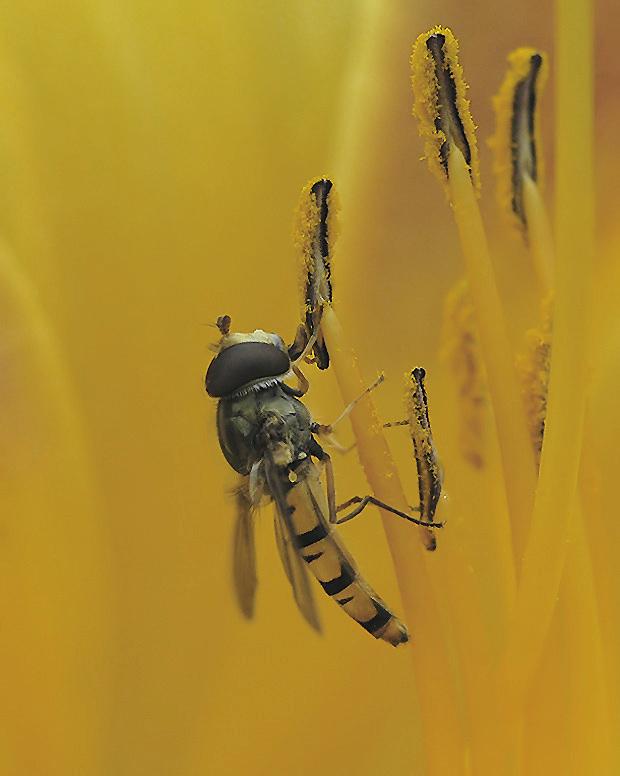 Pollennascher
