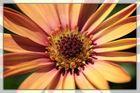 Pollenpool