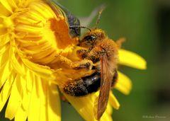 Pollenrausch