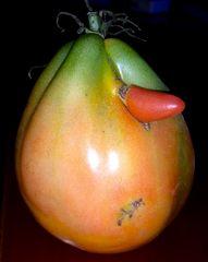 Pomodoro maschio...
