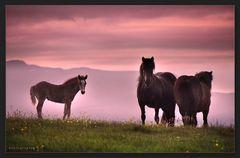 poneys  jouisseurs