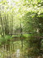 pont entre les arbres