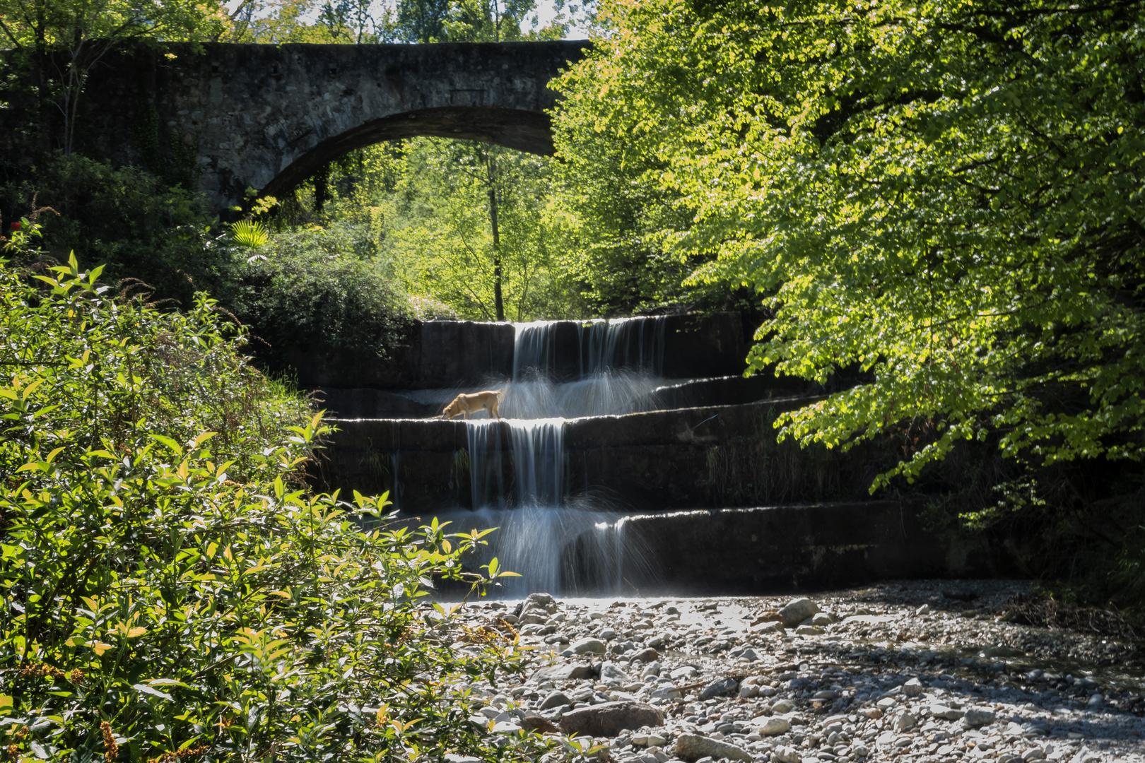 Ponte sul Froda