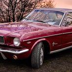 pony 1966