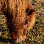 Pony beim Frühstück