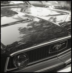 Pony Car V
