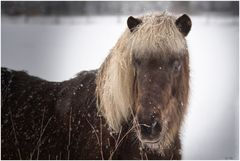Pony frisch geschnitten?