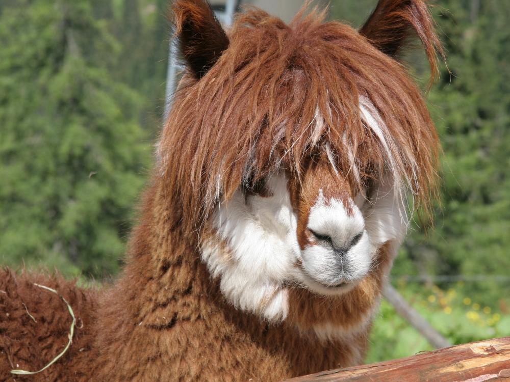 Frisur mit oder ohne pony