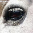 Ponyauge
