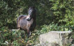 Ponyquarry 045