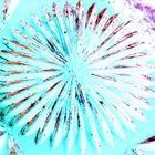 POP-Art Blume
