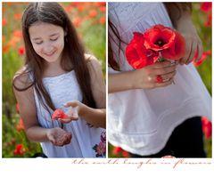 [ poppies ]