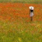 Poppy de rêve